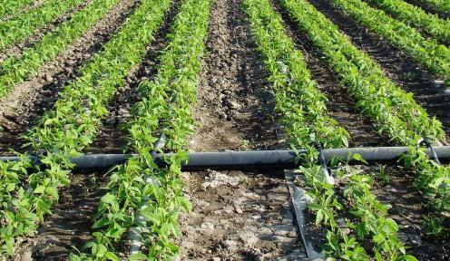 农业节水灌溉技术存在的问题与发展对策