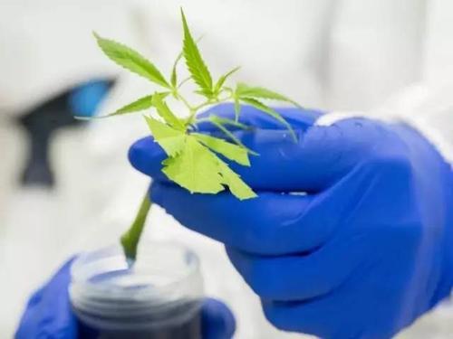露笑科技与中国农业科学院达成合作 共探工业大麻食品加工应用