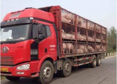 """《关于对仔猪及冷鲜猪肉恢复执行鲜活农产品运输""""绿色通道""""政策的通知》发布"""