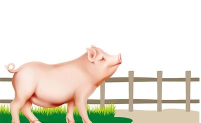 多部门发文,出台17条政策措施支持生猪生产发展