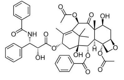 紫杉醇在多种纤维化疾病中应用研究进展