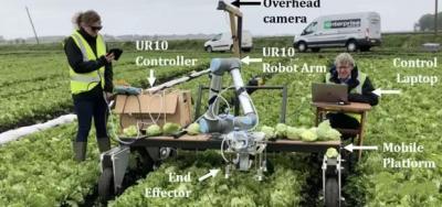 剑桥大学发明机器人Vegebot,实现让机器人靠AI收球生菜
