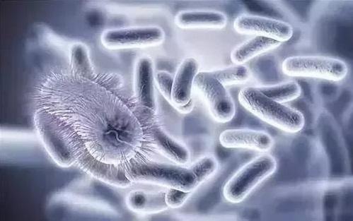 香港城市大学揭示抗生素新靶点 剑指超级细菌毒力开关