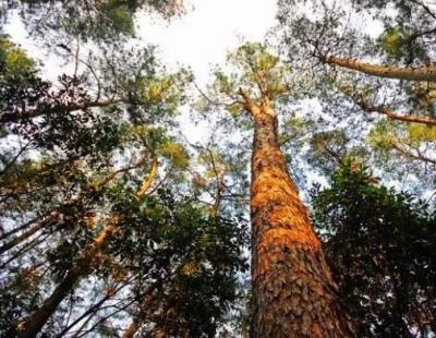 广西上半年林业总产值2892亿元,同比增长10.3%