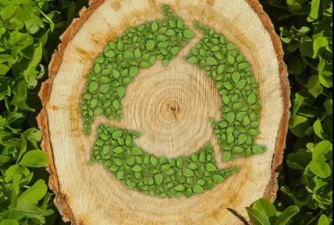 黑科技!美国以木材废料为来源制造新型植物蛋白原料