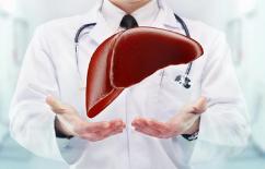 美研发活体肝脏保存时间新方法 从9小时增至27小时