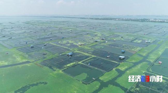 阳澄湖生态压力增大水质污染蓝藻蓝藻亮起水质警示灯