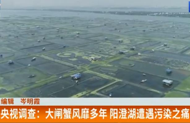 大闸蟹风靡多年 阳澄湖遭遇污染之痛