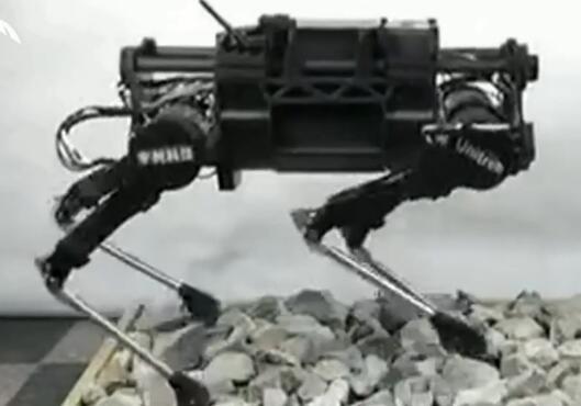 机器狗成功打入野狗内部