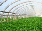 定做蔬菜大棚、苗圃大棚、葡萄大棚、养殖大棚等