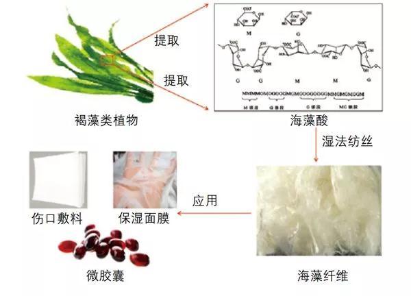 海藻酸纤维的制备与应用流程示意图