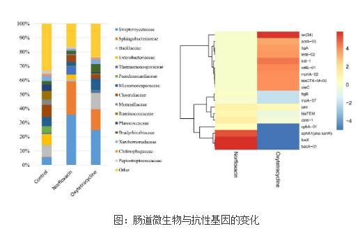 肠道微生物与抗性基因的变化