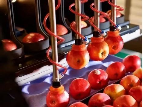 新西兰苹果包装机器人投放市场