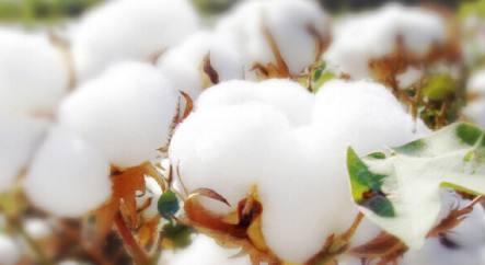 《关于2017/2018年度中国棉花质量情况的通报》