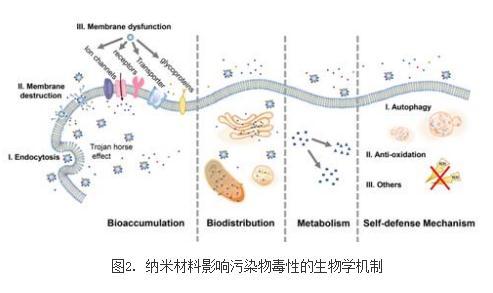 综述纳米材料影响污染物毒性效应的作用机制