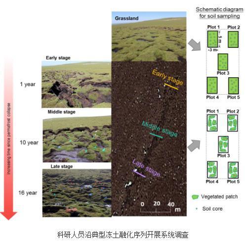 揭示土壤氮可利用性在调控冻土区土壤碳激发效应中的作用机制