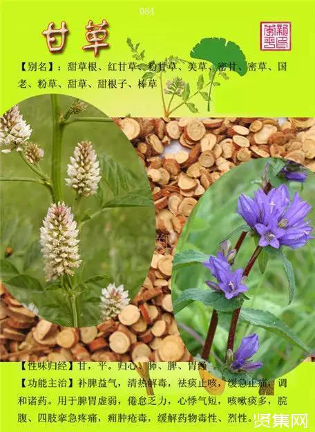 100种中草药大全名字和图片、形态及功效主治