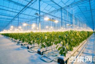 微软、英特尔和腾讯探索将人工智能应用于温室农业中