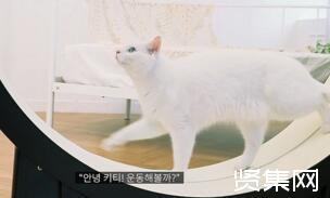 韩国初创公司发布猫咪专属智能跑步机The Little Cat,预计售价1800美元
