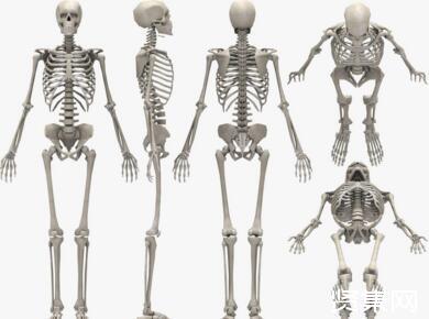 瑞典研究人员:小鼠骨骼生长原理与人类一样,儿童生长障碍者迎来新希望