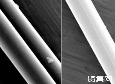 麻省理工学院研究员发现蜘蛛丝具有不寻常特性,或可用作机器人的肌肉