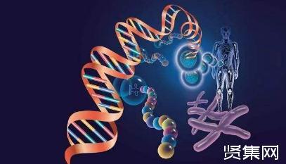 罕见基因变异或能解释身高是如何遗传