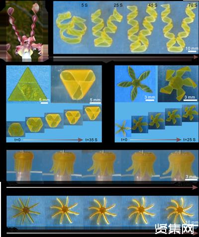 中科院兰州化物所王晓龙团队采用3D打印实现可控变形水凝胶