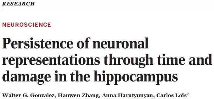 最新研究揭示牢固记忆如何形成  让记忆不褪色?
