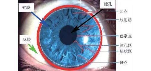 眼睛打马赛克和虹膜识别有关吗?什么是虹膜识别?