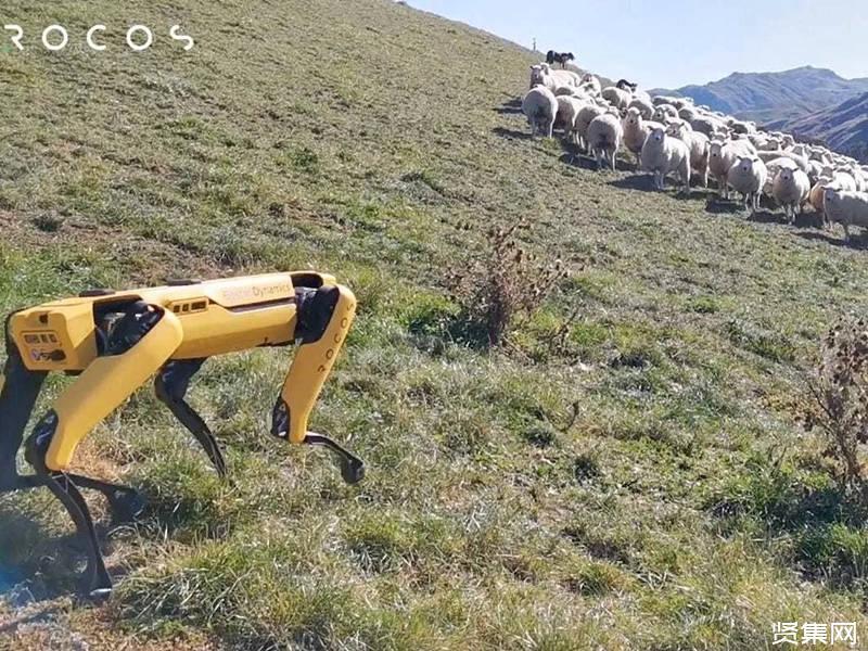 機器狗的煩惱:缺少實踐經驗,崗位實習