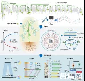 """大豆首次實現了基于圖形結構的基因組構建,被稱為""""基因組學的里程碑工作"""""""