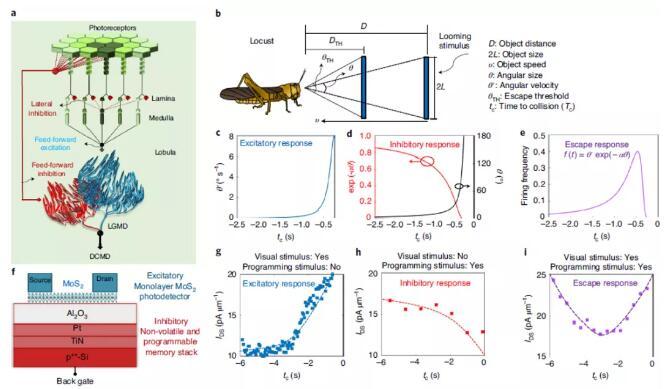 《【天富娱乐代理注册】科学家开发出仿生无人驾驶防撞探测器,来源于蝗虫的智慧》