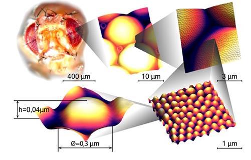 研究人员开发新型抗反射纳米涂层 或将应用于隐形眼镜