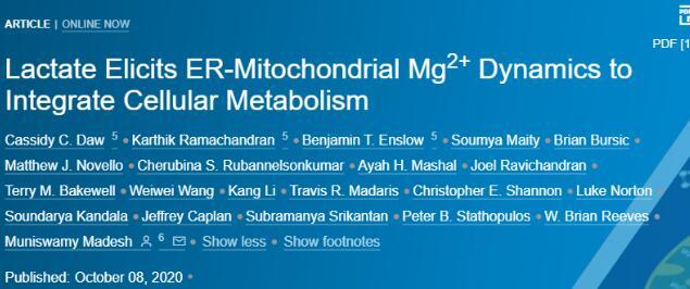 《【天富娱乐app登录】科学家发现乳酸是细胞内镁离子动力学的配体分子》