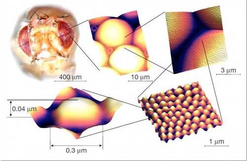科学家研发自清洁抗反射涂层 可应用于纳米电子、汽车工业等领域