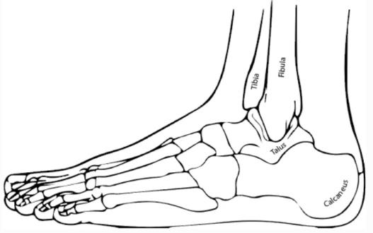 《【手机欧亿注册】基于人体下肢运动学与动态模型,研究八自由度外骨骼的机器人物理治疗》