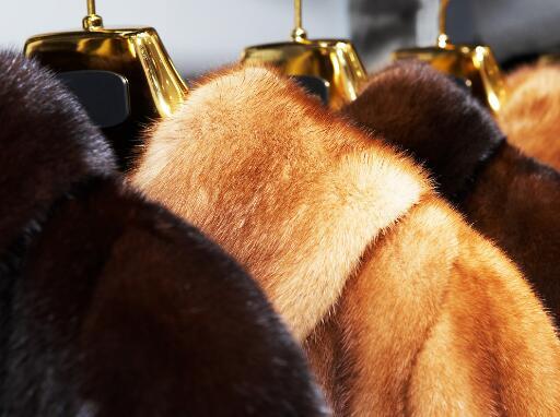 丹麦宣布捕杀1700万只水貂 皮草龙头华斯股份突遭横祸