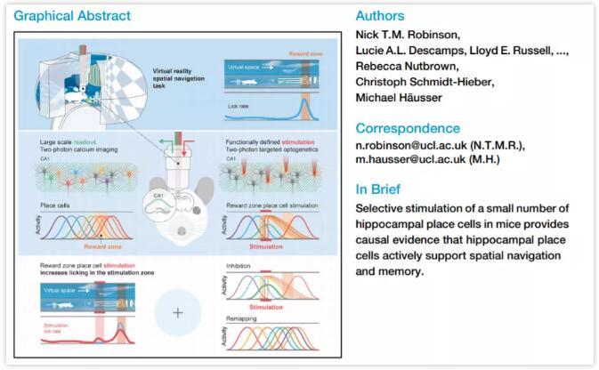 """記憶研究新突破!激光束""""打開""""小鼠神經元揭示記憶的GPS系統"""