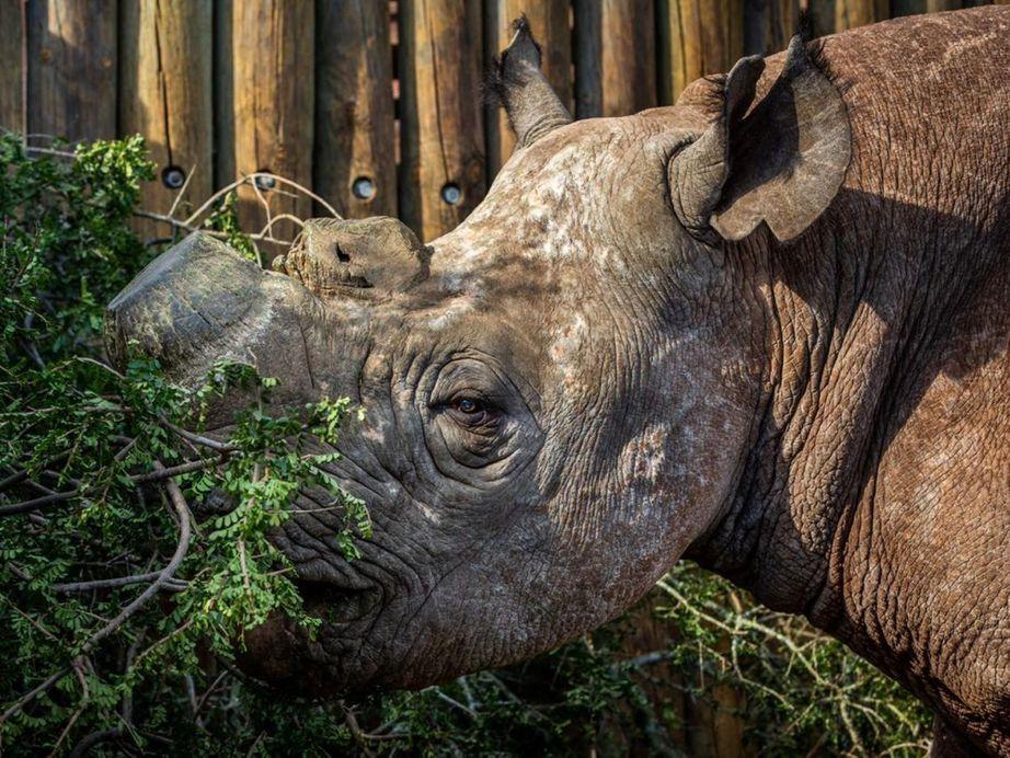 FLIR公司开发的热成像技术能够帮助保护黑犀牛等濒危动物