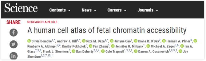 科學家描繪人類胎兒發育的動態軌跡與染色質可及性圖譜