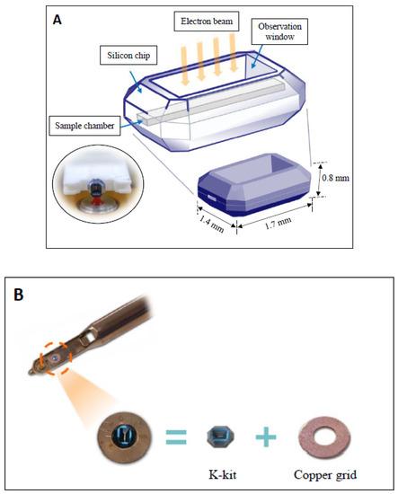 搭载新型微芯片的电子显微镜,可快速对血小板进行原位成像!