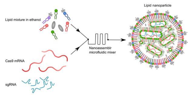 CRISPR技术成功治疗活体动物的癌症:世界首例且永久有效