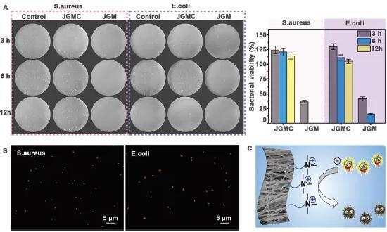 川大研制新型骨再生膜:可抗菌,还可进行免疫调节