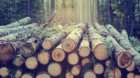 《【欧亿代理注册】巴斯大学利用天然木糖制造可持续的聚合物 可用作电池电解液》