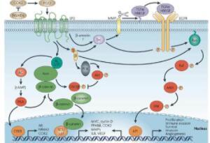 新冠病毒的致命弱点终于知道了:人体中的一种酶能让其停止繁殖