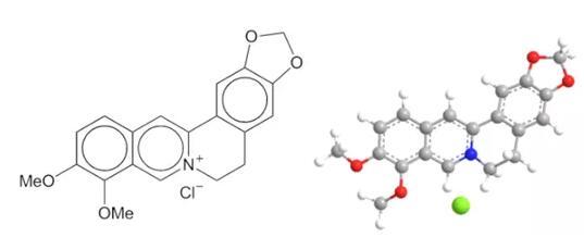 哑巴吃黄连!揭秘黄连素-盐酸小檗碱的过去 现在和未来