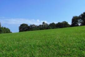 首款永久内置的抗菌运动型人造草坪重磅来袭:可永久抵御细菌等的侵袭