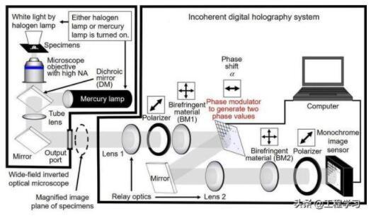 日本开发了一种高速全息荧光显微镜系统,基于数字全息技术