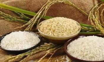 全球粮价涨势凶猛:玉米、大豆、小麦、大米通涨 最高涨幅达62%