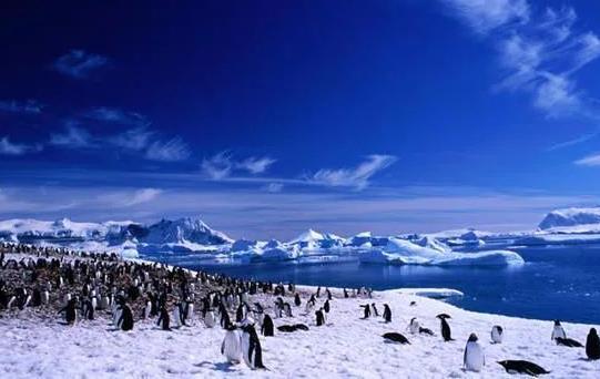 """南极又现""""西瓜雪"""" 南极气温虽无明显大幅变化但也仍需敲响警钟"""
